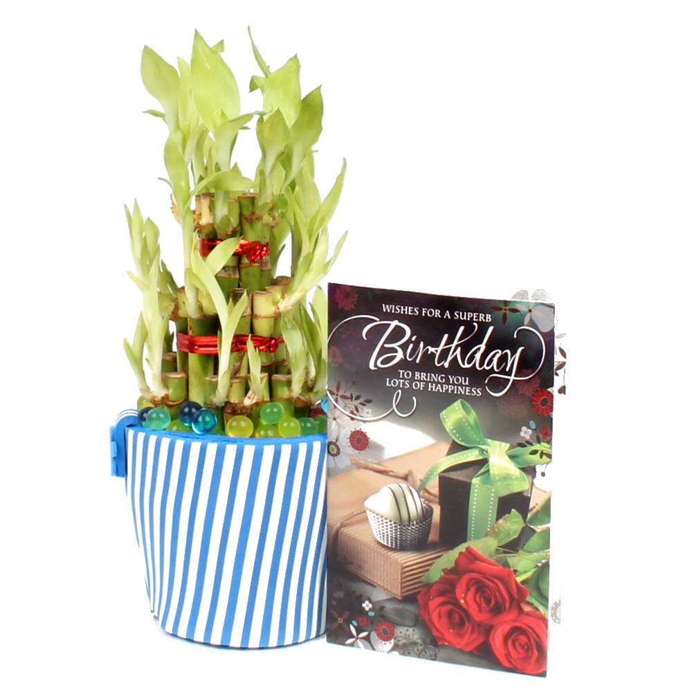 Birthday Greeting Card With Good Luck Plant