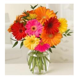 10 Multi color Gerberas in vase