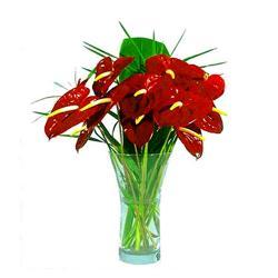 10 Red Anthurium In Glass vase