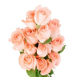 12 Fresh Pink Roses Bunch