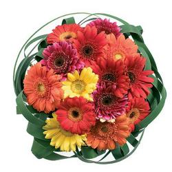 15 Multi Color Gerberas