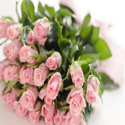 25 Baby Pink Roses Bouquet