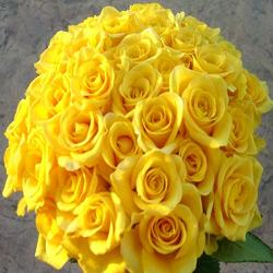 50 Yellow Rose Bouquet