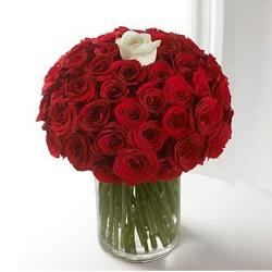 51 Fresh Roses