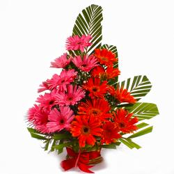 Basket Arrangement of Pink and Orange Gerberas