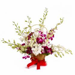 Basket of Dozen Multi Color Orchids