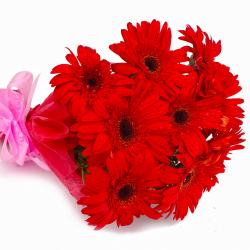 Bouquet of 10 Red Color Gerberas with Tissue Wrapping