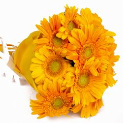 Bouquet of 10 Yellow Gerberas with Tissue Wrapped