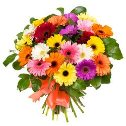 Bouquet of 25 Multi Color Gerberas