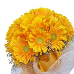 Bouquet of Dozen Yellow Gerberas