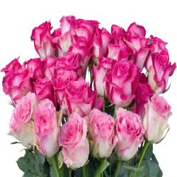 Bouquet of Fresh 28 Pink Roses