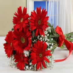 Bouquet of Red Gerberas Cellophane Wrapped