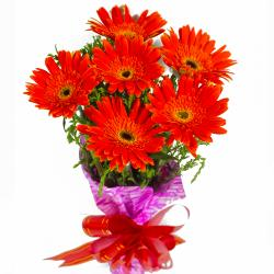 Bouquet of Red Gerberas
