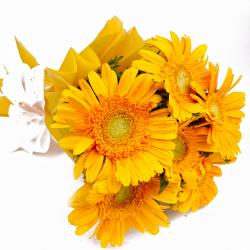 Bouquet of Six Yellow Color Gerberas in Tissue Wrapping