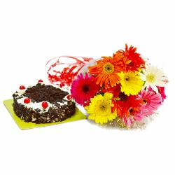 Bright 10 Mix Color Gerberas with Half Kg Black Forest Cake