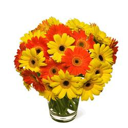 Brighten Gerberas in Vase