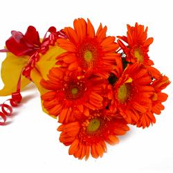 Bunch of 6 Orange Gerberas in Tissue Wrapping