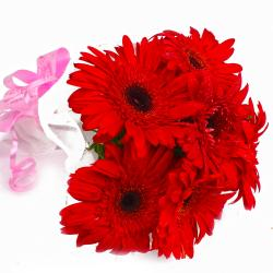 Bunch of 6 Red Gerberas in Tissue Wrapping
