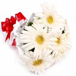 Bunch of 6 White Gerberas in Tissue Wrapping