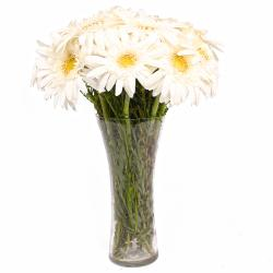 Classic Glass Vase with 12 White Gerberas