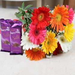 Colourful Gerberas with Cadbury Dairy Silk Chocolate