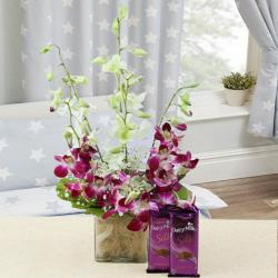 Combo of Six Colorful Orchids Vase with Silk Chocolates