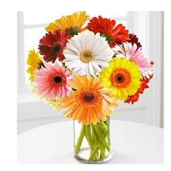 Dozen Multi color Gerberas in vase