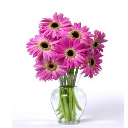 Dozen Pink Gerberas In Glass vase