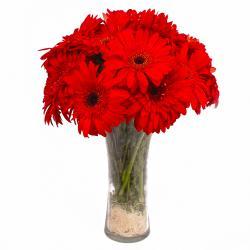 Dozen Red Gerberas in Vase