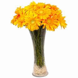Dozen Yellow Gerberas in Vase