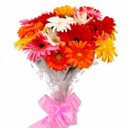 Eighteen Multi Color Gerberas Bouquet Cellophane Wrapped