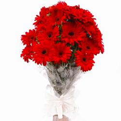 Eighteen Red Gerberas in Cellophane Wrapped