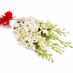 Exotic 10 White Orchids in Tissue Paper Wrapped