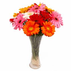 Fifteen Multi Colorful Gerberas Arranged in Glass Vase