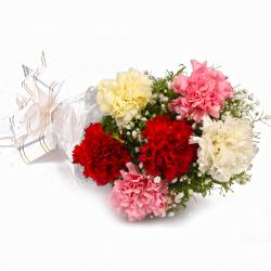 Fresh 6 Colorful Carnations in Cellophane Packing