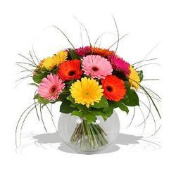 Fresh colorful Gerberas in Vase