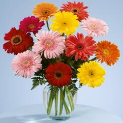 Fresh Mix Gerberas Vase