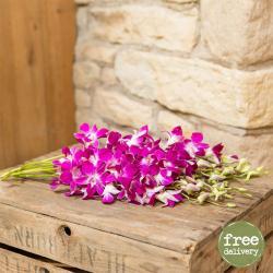 Fresh Orchids Bouquet