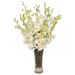 Glass Vase of 10 Exotic White Orchids