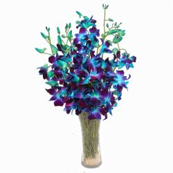 Glass Vase of 10 Stems Exotic Blue Orchids