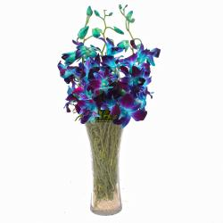 Glass Vase of 6 Stem Blue Orchids