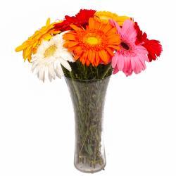 Glass Vase of Ten Multi Color Gerberas