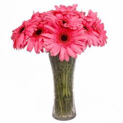Glass Vase with 12 Pink Gerberas