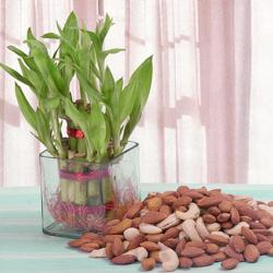 Good Luck Plant with Assorted Dry fruits