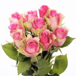Lovely Pink Roses Bunch