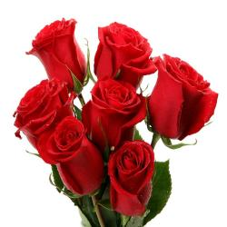 Lucky Seven Red Roses !