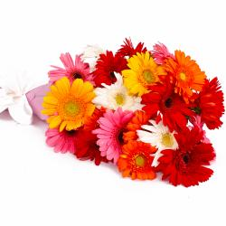 Multi Color Gerberas Tissue Wrapped