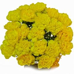 Pleasant Yellow Carnation Bouquet