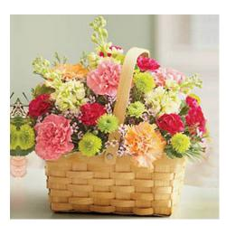 Rainbow Carnation Basket