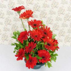 Red Gerberas Basket
